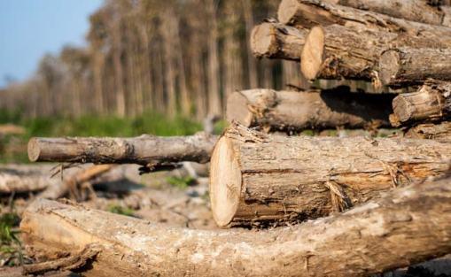 beberapa model pohon kayu jati